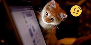 TDK ve BTK'dan Sosyal Medyaya Dil Ayarı: CD Yerine 'Yoğunteker' Web Yerine ise 'Örümcek Ağı'