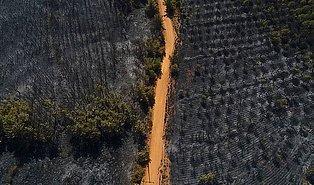 Kara Tablo: Ayvalık Tabiat Parkı'ndan Yangın Sonrası Yürekleri Burkan 13 Fotoğraf