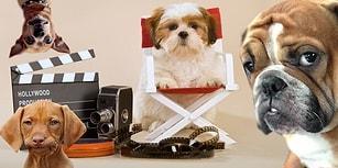 26 Ağustos Dünya Köpek Günü'nde İzleyebileceğiniz Birbirinden Hav-Hav 26 Film