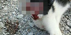Sosyal Medyada Kan Donduran Görüntü: Bir Kişi, Kedinin Gözünü Oyup Fotoğrafını Paylaştı İddiası