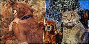 Kim Demiş Anlaşamazlar Diye? Minik Pisiciklerle Tatlı Köpüşlerin Aslında Dost Olduğunun 23 Kanıtı