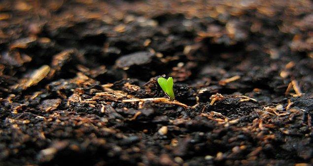 Dünyada 300 bin ton polyester kumaş atığı olduğunu vurgulayan Ezra ve Tuba Çetin kardeşlerin hayata geçirmeyi planladıkları bir diğer tasarım ise  toprağa gömüldüğünde içerisine yerleştirilen tohumlar sayesinde bitkiye dönen kıyafetler.
