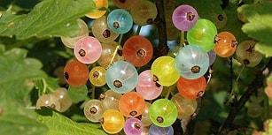Daha Evvel Hiç Görmemiş Olabileceğiniz Yurdumuzda Yetişen Ağız Sulandıran 12 Meyve