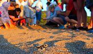 20 Yılını Yavru Caretta Carettaların Denize Ulaşmasına Adayan Güzel Adam: Tosbağacı Mustafa
