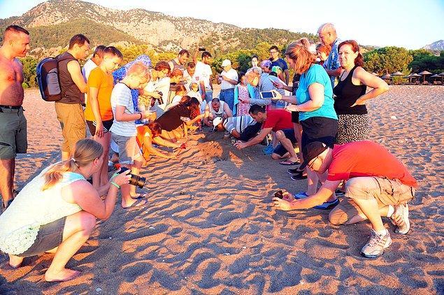Mesaisine sabahın erken saatlerinde başlayan Ilgaz, yerli ve yabancı turistlere de deniz kaplumbağaları hakkında bilgi veriyor.