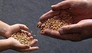 Tohum Takas Etkinlikleri Sayesinde Sizi Atalık Tohumlarla Tanıştırabilecek 11 Komünite