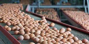 Türkiye'de de Rastlandığı İddia Edilmişti: Bakanlık Fipronilli Yumurta Tespit Edilmediğini Açıkladı