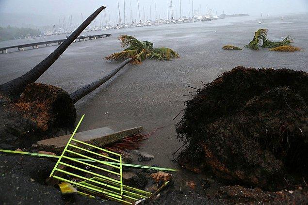 7. Puerto Chico Limanında birikmiş kalıntılar, Fajardo, Porto Riko.