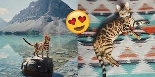 Atıldığı Maceralarla ve Seyahat Fotoğraflarıyla Hepimizi Kıskandıran Gezgin Kedi Suki!