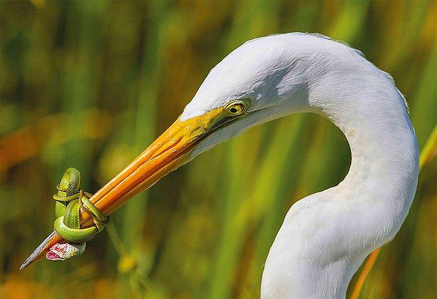 1. The Battle (Savaş) - Jose Garcia, ABD Kuş Davranışı Kategorisi