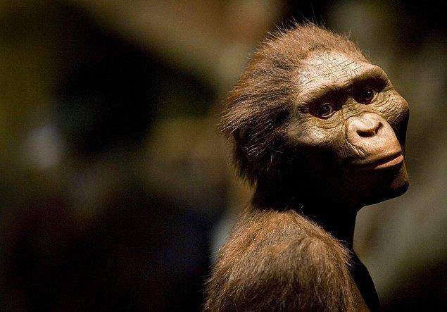 İnsanların milyonlarca yıl evvel Afrika'dan geldiğine dair yaygın bir inanış var.