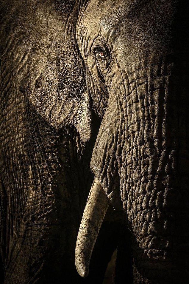 11. 📸 David Lloyd, Kenya