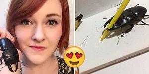 Evcil Hayvan Seçimini Bir Geyik Böceğinden Yana Kullanan Kadının Kırıp Geçiren Tweetleri