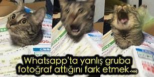 🐍 Derin Gıybetlerin Vazgeçilmez Adresi WhatsApp Grup Sohbetlerine Dair Her Şey...