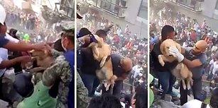 Meksika Depreminde Saatler Sonra Enkazın Altından Köpek Çıkınca Büyük Sevinç Yaşandı