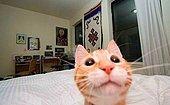 Hayalindeki Kediyi Anlat, En Kaliteli Tarafını Söyleyelim!