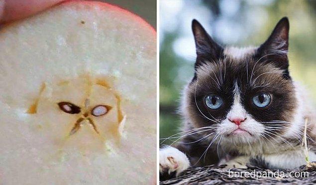 25. Ne kadar da aksi bir elma! Yerimmm seni.