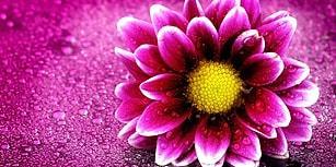 Beğendiğin Çiçeklere Göre Melek misin Şeytan mı?