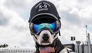 Havaalanındaki Doğal Yaşamı Korumak İçin Çalışan Köpek: Piper