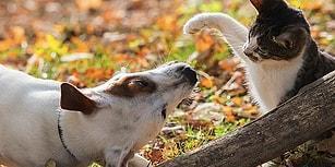 Oxxo Hayvanları Koruma Gününde de Sokaktaki Dostlarımızı Unutmadı!