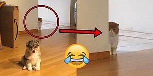 Kedi Sahiplerine Can Dostlarının Ne Kadar Hıyar Olabileceğini Hatırlatan 18 Tanıdık Görüntü