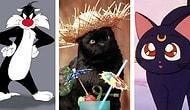 Onları Uğursuz Sananlara İnat Çok Sevilen Ekranların En Popüler 20 Kara Kedisi