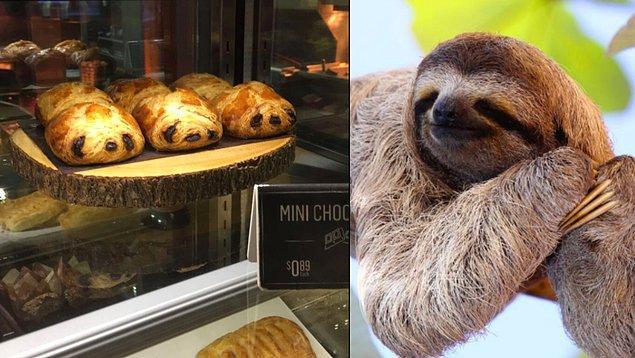 Tembel hayvanlara benzeyen bu çikolatalı çörekler