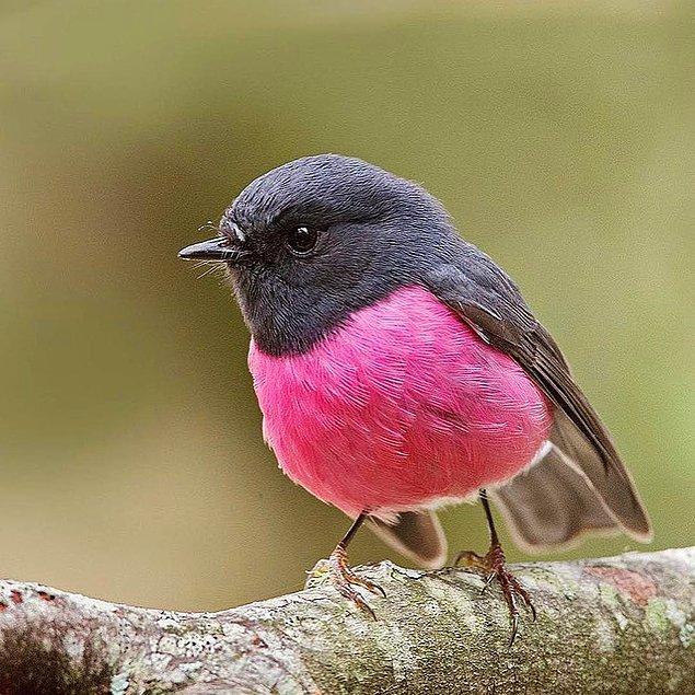 2. Dünyanın en sevimli kuşu olabilir. 💕🐦