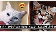 Kedi Aşıkları Buraya! İşte Minnoş Dostlarımızla İlgili Az Bilinen Gerçekler