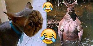 Baktıktan Günler Sonra Bile Aklınıza Her Geldiğinde Hunharca Güleceğiniz 21 Görüntü