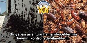 Böceklerden Korkanların Asla Öğrenmek İstemeyeceği 16 Kaşındıran Gerçek 🕷