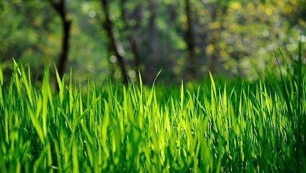 Yemyeşil çimenler.