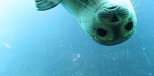 Hangi Okyanus Canlısısın?