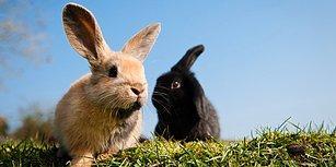 Polonya Sağlık Bakanlığı'ndan Kamu Spotu ile Çağrı: 'Tavşanlar Gibi Sevişin!'