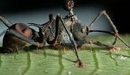 Kıyamet Filmi Gibi: Karıncaları Adeta Zombiye Dönüştüren Sinsi Mantar!