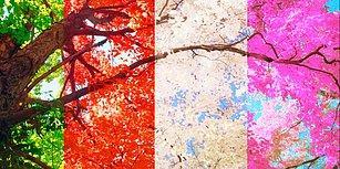 8 Rastgele Soruya Göre Hangi Mevsimde Doğduğunu Tahmin Ediyoruz!