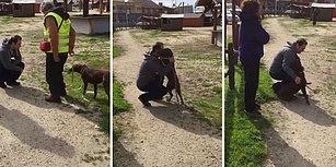 3 Koca Yılın Ardından İnsan Dostuyla Bir Araya Gelen Köpeğin Kalpleri Eriten Karşılaşma Anı