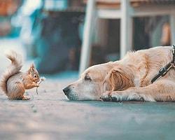 5-Sincap ve Köpek