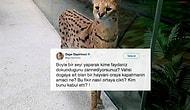 Düpedüz Acımasızlık: Doğal Yaşamından Kopartılan Serval Kedisi, AVM'de Sergileniyor!