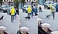 Sokak Ortasında Gasp Edilen Kadını Koruyan Sokak Köpeği