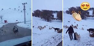 Dağ Başında Soğukta Aç Kalan Sokak Hayvanlarına Mama Götüren Güzel İnsanlar