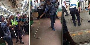 İnsanlar Her Zaman Vahşi Olmak Zorunda mı? Metroya Giren Yılanı Beklenmedik Bir Şekilde Etkisiz Hale Getiren Adam