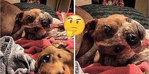 Herkesin Kafası Karışık! Göz Yanılmasını Bambaşka Bir Boyuta Taşıyan Minnoş Arkadaşın Fotoğrafı