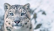 Sorumlusu Bizleriz: Nesli Tükenmekte Olan Hayvanlara Ait Bu Hüzünlü Fotoğraflar İçinizi Acıtacak