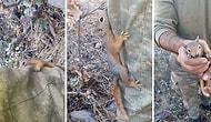 Doğada Askerlerimizle Barışık Yaşayan Yabani Sincap