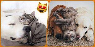 İki Köpek Bir Kedi! Bu Üçlünün Arkadaşlık İlişkisi Gözlerinizden Kalpler Çıkaracak! ❤️