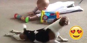 Ufaklığa Nasıl Emeklemesi Gerektiğini Gösteren Köpek