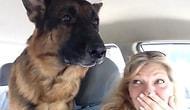 Veterinere Geldiğini Anlayan Köpeğin Yürek Burkan Tepkisi