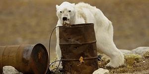 Kutup Ayıları Çölde Yaşayamaz! Tek Bir Kareyle Küresel Isınmanın Geldiği Boyutu Yüzümüze Çarpan Fotoğrafçı