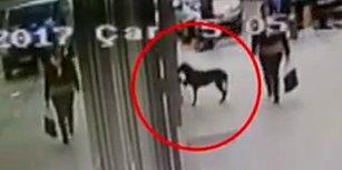 Kocaeli'de Marketin Camına Patisiyle Vurup Yemek İsteyen Köpek